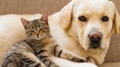 'Köpekler mi Yoksa Kediler mi Daha Zeki?' Sorusunun Yanıtını Belli Oldu