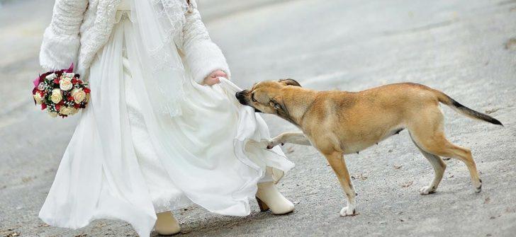 Kimse Kadının Elbisesinin Altında Ne Olduğunu Bilmiyordu – Köpek Durumu Sezdi Ve Bakın Ne Yaptı