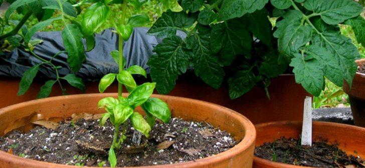 Mutfağınızda Yer Alan Bir Malzemeyle Bitkilerinizi Coşturacaksınız
