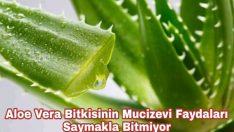 Saksınızdaki Mucize Aloe Veranın Cilt İçin Faydaları