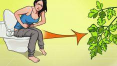 İdrar Yolu Enfeksiyonu İnsanı Canından Bezdirir Üzülmeyin Evde Doğal Tedavi Yöntemleri Var