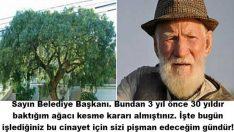 30 Yıldır Baktığı Ağaç Belediye Tarafından Kesilen Yaşlı Adamın İnanılmaz İntikamı