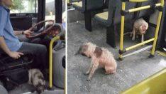 Fırtınanın Ortasında Kalan Köpeği Yasak Olmasına Rağmen Otobüsüne Aldı – Şimdi Herkes Onu Övüyor