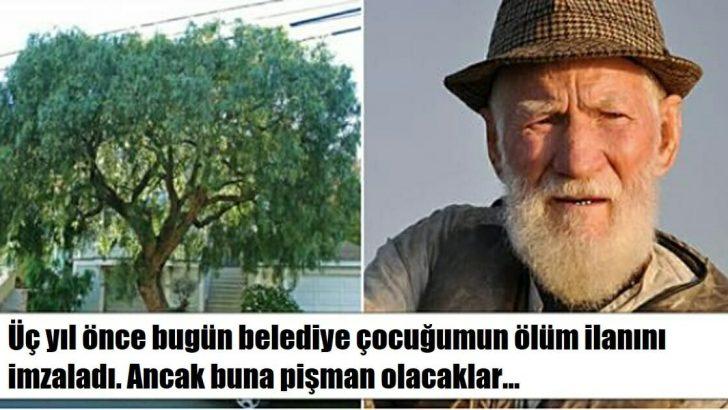 Belediye Adamın 30 Yıllık Ağacını Kesti – Adam Bakın Nasıl İntikam Aldı