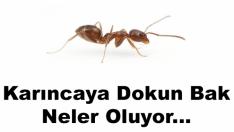 Karıncaya Dokun Bak Neler Oluyor… Ama Korkma