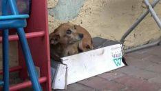 Sokak Köpeği Yerinden Hiç Kalkmıyordu – Haftalar Sonra Sırrı Ortaya Çıktı
