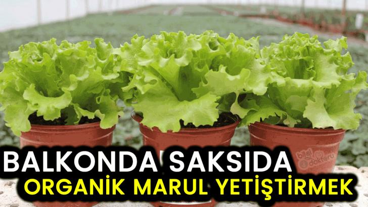 Balkonda Sebze yetiştirmek: EVDE MARUL , KIVIRCIK YETİŞTİRMEK