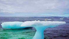Mantar Şeklindeki Buzdağı Balıkçının Dikkatini Çekti – Yakından Bakınca Üstünde Gördüğüne İnanamadı