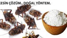 Hamam Böceklerinden Tümden Kurtulmak İçin Doğal Böcek İlacınızı Kendiniz Yapın