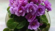 Çiçek Coşturan Kuru Maya Tarifi