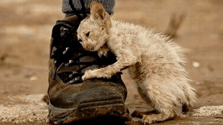 Çirkin' Adını Verdikleri Sokak Kedisini Kimse Sevmiyordu – Kedi Son Nefesini Verirken Görenleri Ağlattı