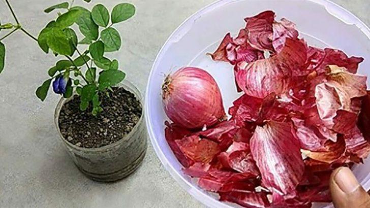 Soğan Kabuklarının Ne İşe Yaradığını Bilseniz Onları Çöpe Atmazdınız