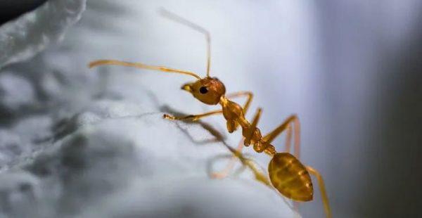 Evinizi Karıncalar Mı Bastı, İşte Doğal Kurtulma Yöntemi